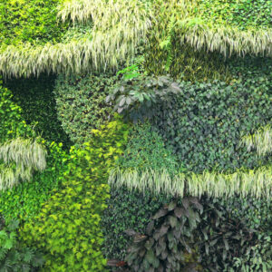 shaded plants