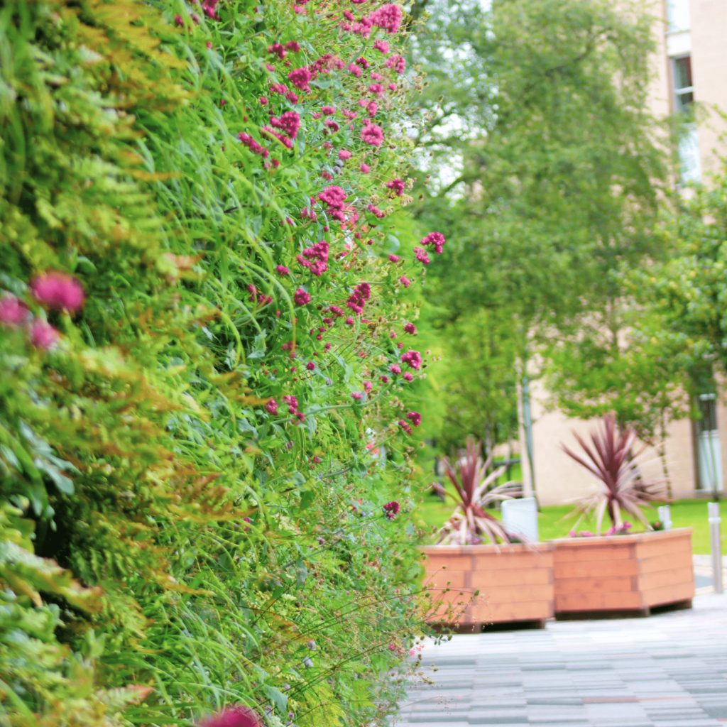Wonderwall Living Wall Building Benefits