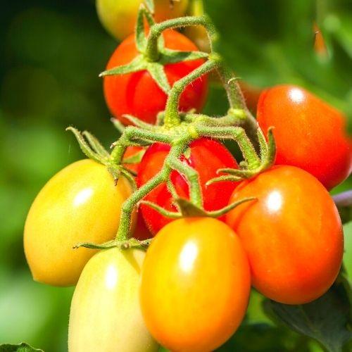Image Cherry Tomato