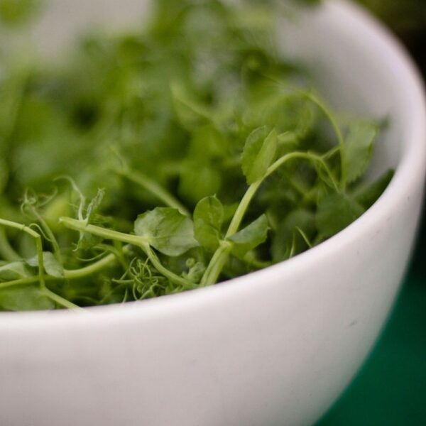 SeedCell Bowl of Herbs