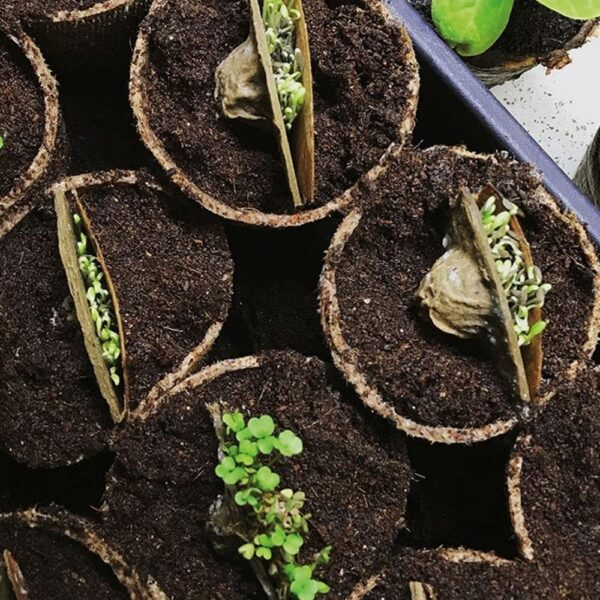 SeedCell in Seedling Pots